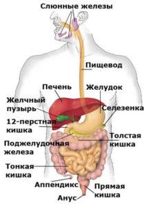 Чистый кишечник – здоровый организм