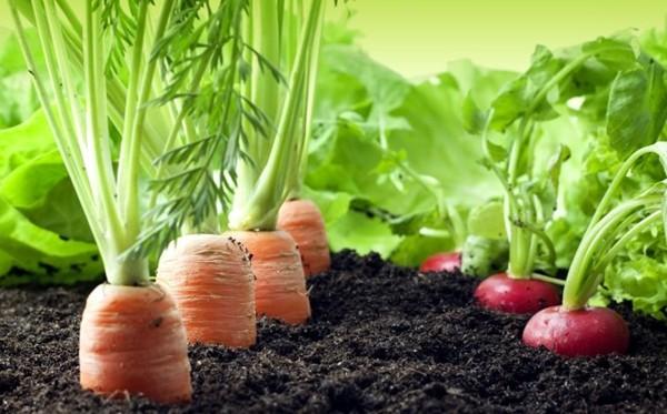 Если овощи замерзли