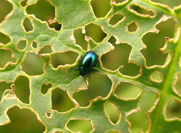 Средства защиты растений от болезней, вредителей и сорняков