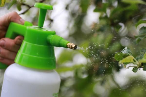 Доступные способы борьбы с садовыми муравьями