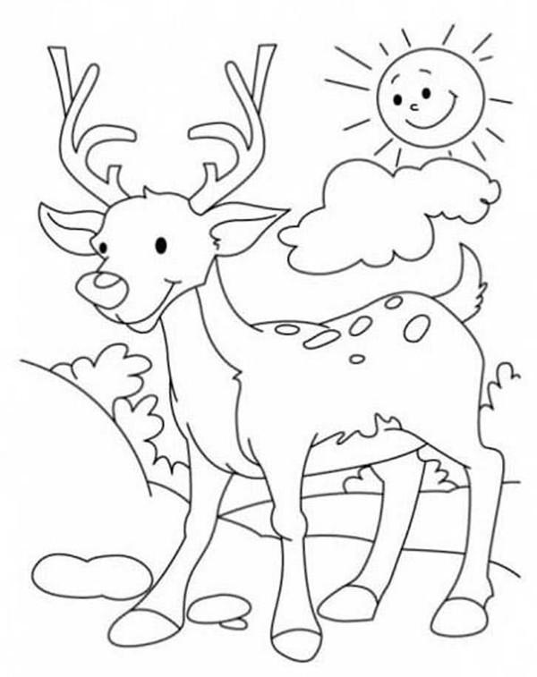 Зачем и для чего нужны ребенку раскраски?